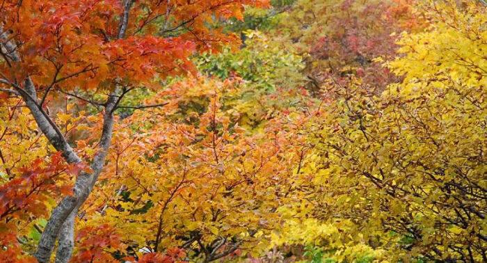 後烏帽子岳の紅葉